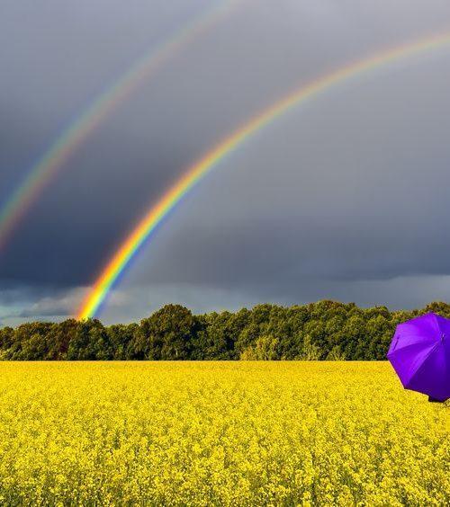 Tęcza na polu parasol Fotolia 204497733 S compressor 500x564 - Bardzo intrygujący kolor